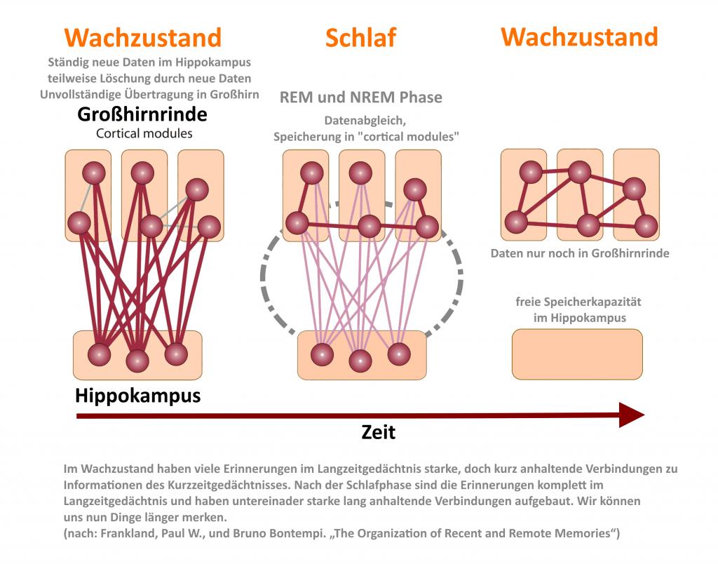 Was passiert im Gehirn? Bild Original von Frankland und Bontempi, etwas überarbeitet von mir, angelehnt an die Arbeit von Walker (2009)